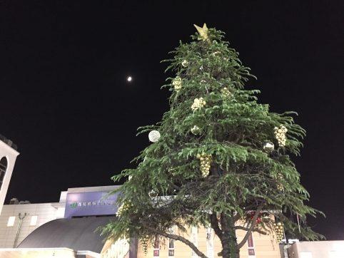 11/07 点灯前のツリー